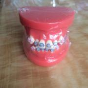 歯列模型 口腔模型 上下歯列矯正模型(セラミックブラケット セラミック矯正) HST-B1-03